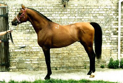 Horse Pic001