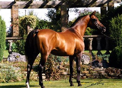Horse Pic004