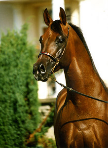 Horse Pic008