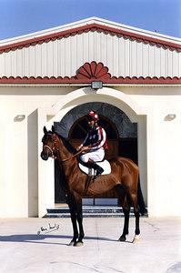 Horse Pic007