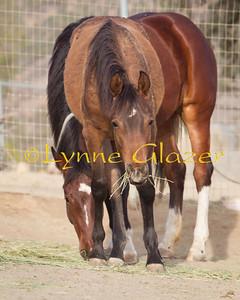 Semper (pony colt)