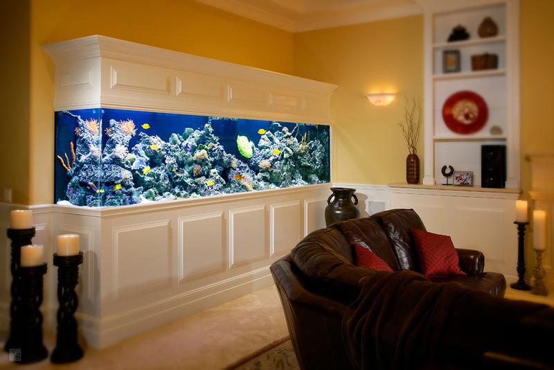 Fish King Custom Aquariums, Costa Mesa, CA.  2000-2013.