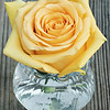 E4501<br /> <br /> Yellow Rose in Vase