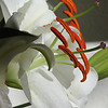 A is for ANTHER...the end of the stamen where the pollen matures :-)