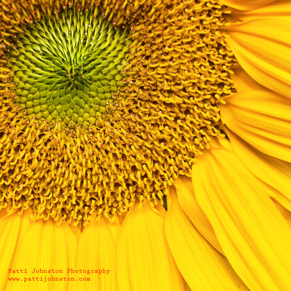 9521A<br /> <br /> Sunflower Center with Petals