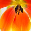 November 1, 2013: ONE flower; infinite beauty.