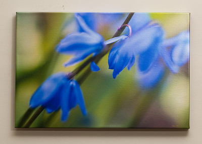 "SALE DETAILS:   16x24 Metallic Gallery Wrapped Canvas (1 1/2"" deep)                             $65 (does not include sales tax or shipping).  Original price: $225  IMAGE DETAILS: 041807-021 Scilla"