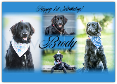 Brody Collage