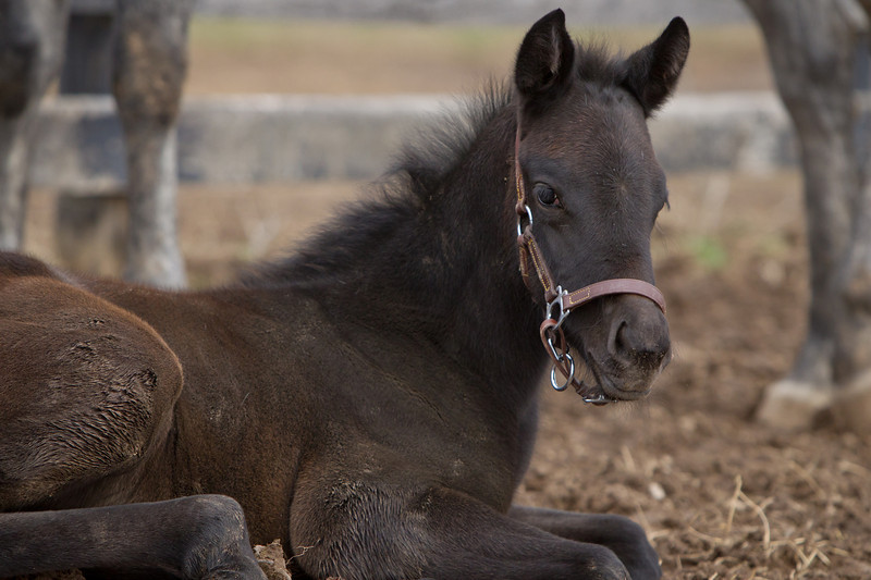A Limehouse foal at Full Circle Farm.