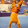 TigerPawFun010