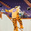 TigerPawFun035