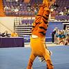 TigerPawFun008