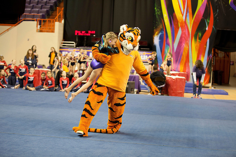 TigerPawFun013