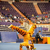 TigerPawFun005