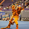 TigerPawFun011
