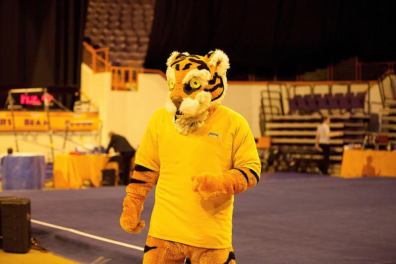 TigerPawFun017