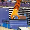 TigerPawFun045