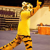 TigerPawFun019