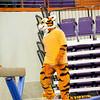 TigerPawFun040