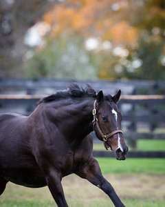 Concinnous at Gainesway 10.21.14