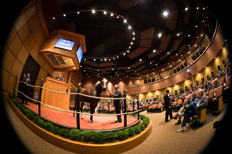 Hip #109, Majestic River, sells for $950K at Fasig Tipton 11.03.14.