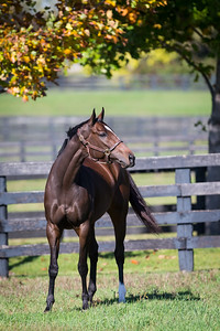 Majestic River at Gainesway 10.17.14