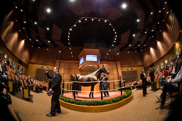Hip #180, Concinnous, sells for $2M at Fasig Tipton 11.03.14.