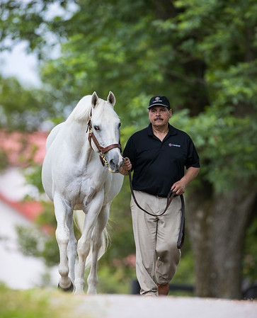 Tapit at Gainesway 5.28.21