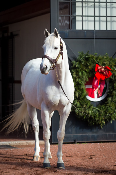 Tapit at Gainesway 12.15.16.