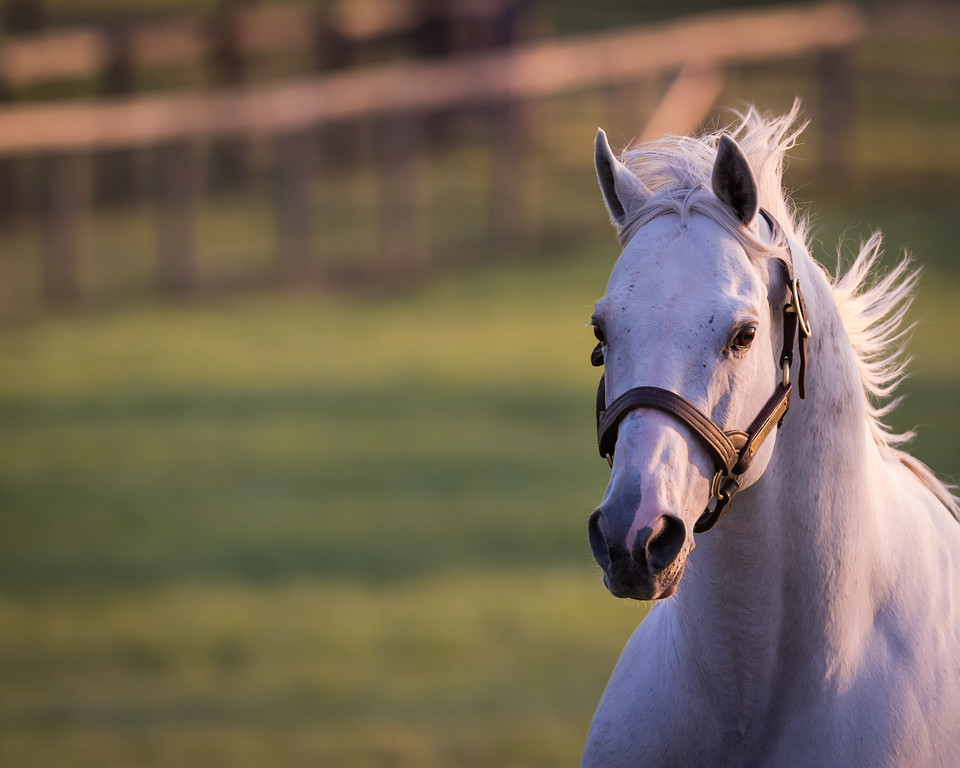 Tapit at Gainesway 4.19.14.