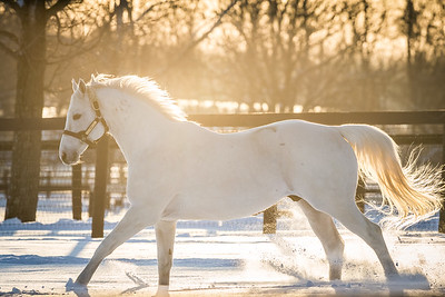 Tapit at Gainesway 3.07.15