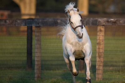 Tapit at Gainesway on 4.19.2014.