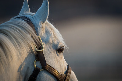 Tapit at Gainesway, 3.08.14.