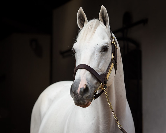 Tapit at Gainesway Farm 8.14.14