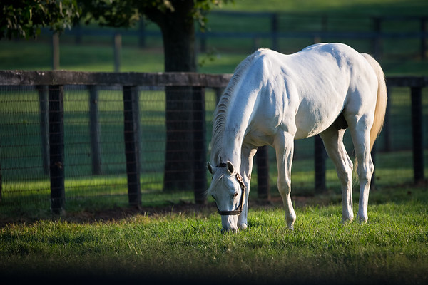 Tapit at Gainesway Farm 8.29.14