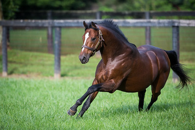 Tapizar at Gainesway Farm 8.22.14