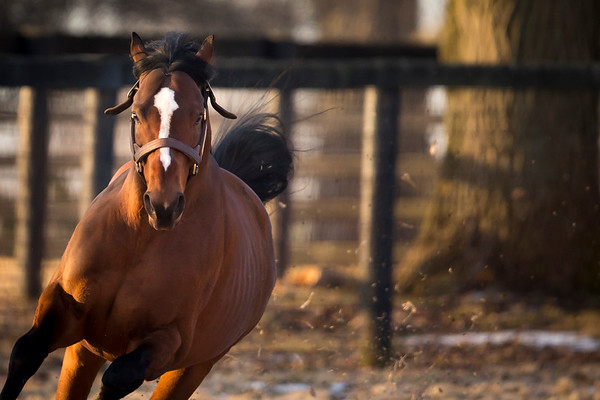 Tapizar at Gainesway Farm on 3.8.2014