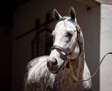 Tapwrit at Gainesway 6.14.21