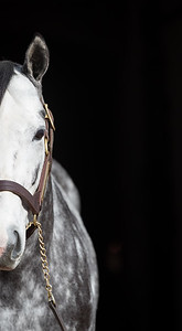 Tapwrit at Gainesway 1.10.19.
