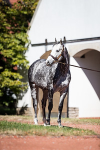 Tapwrit at Gainesway 10.18.19.