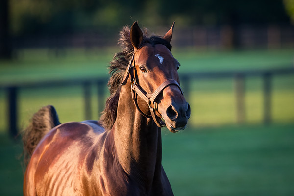 To Honor and Serve at Gainesway Farm 8.29.14
