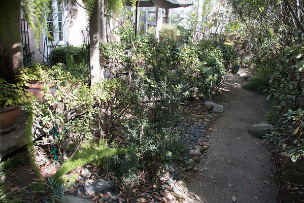 BACK: pathway in front of back deck. Large house on right side of path. Try to hide it. Two large ficus trees are located on the right side of the path (not in picture) Both were severely affected by white fly this year. Concerned.