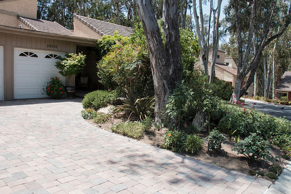 FRONT:  Landscape on right side of driveway.  Roses and some plants that need replacement.