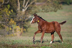 Darley… Foals '13 :