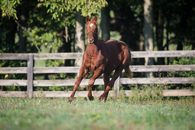 Regal Ransom - Cool Chicken '13 filly