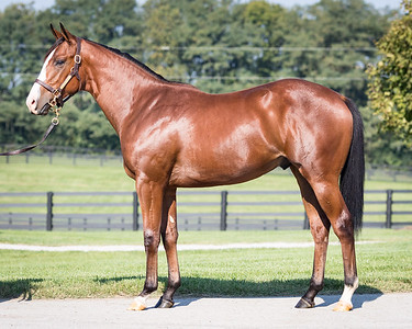 Union Rags - More Than Sweet '16