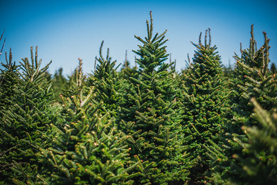 iNNOVATIONphotography-Christmas-Trees-Farm-859482