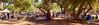 Reunion Weekend<br /> by Jack Foster Mancilla - LensLord™  by Jack Foster Mancilla - LensLord™<br /> ThePicnic