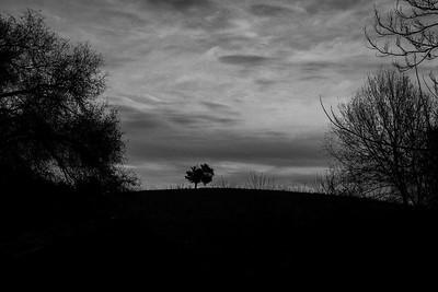 Solitary Sentinel