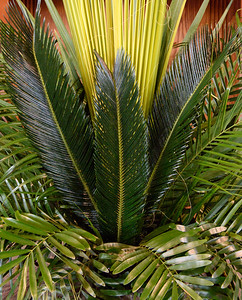 Palm Sunday 2019_1150_300 DPI